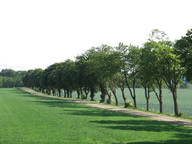 Ridväg nära Benstorp